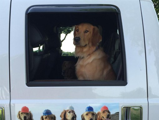 A dog inside a vehicle | roofing in Madison